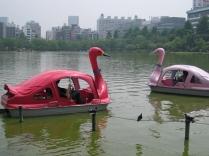 Swans In Tokyo