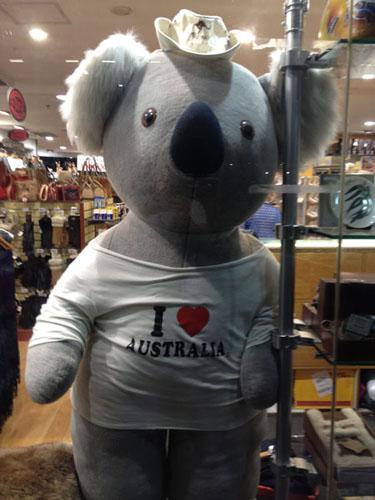 koala_500