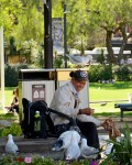A Man and His Bird(s), Circular Quay