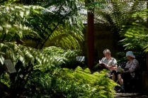Royal Botanic Garden 2