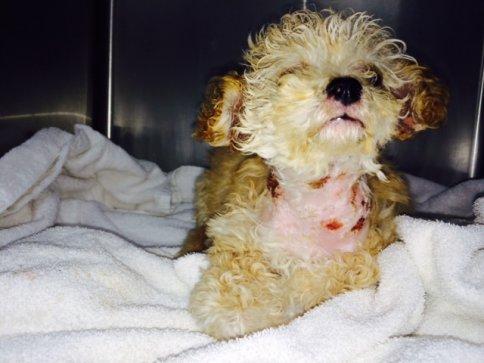 Gem, in bad shape after being rescued on December 21.