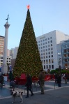 Christmas Tree in Union Square