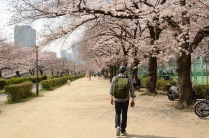 Strolling through Osaka's Minami-Temma Park