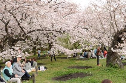 IN Kyoto's Omekoji Park