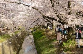 Along the Philosopher's Walk, Kyoto